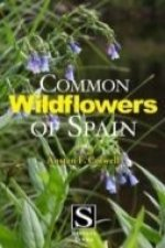 Common Wildflowers of Spain