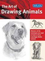 Art of Drawing Animals