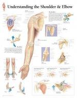 Understanding the Shoulder & Elbow Paper Poster