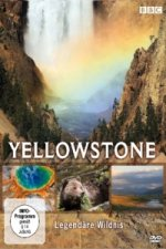 Yellowstone, 1 DVD