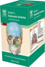 Netter's Flashcards Anatomy