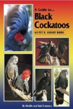 Guide to Black Cockatoos as Pet and Aviary Birds