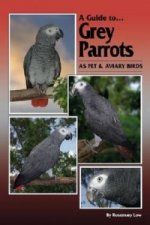 Guide to Grey Parrots