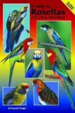 Guide to Rosellas and Their Mutations