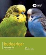Budgeriegars - Pet Friendly