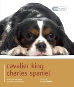 Cavalier King Charles Spaniel - Dog Expert