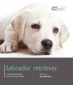 Labrador - Dog Expert