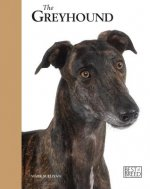 Retired Racing Greyhound