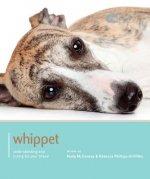 Whippet - Dog Expert