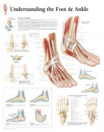 Understanding the Foot and Ankle