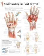 Understanding the Hand and Wrist