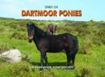 Spirit of Dartmoor Ponies