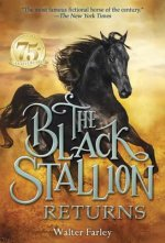 Black Stallion Returns