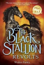 Black Stallion RE