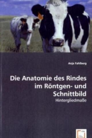 Die Anatomie des Rindes im Röntgen- und Schnittbild