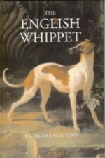 English Whippet