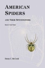 American Spiders and Their Spinningwork, Book 2