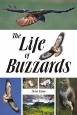 Life of Buzzards