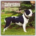 Staffordshire Bull Terriers 2016