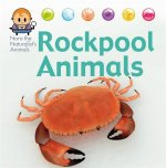 Nora the Naturalist's Animals: Rock Pool Animals