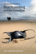 Essential Guide to Beachcombing and the Strandline