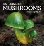 Astounding Mushrooms