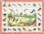 Puzzle MAXI - Život u rybníka/48 dílků