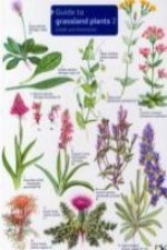 Guide to Grassland Plants 2