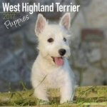West Highland Terrier Puppies Calendar 2017