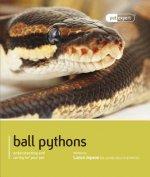 Ball Python (Royal Python)