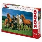 Islandští koně - Puzzle 1000 dílků