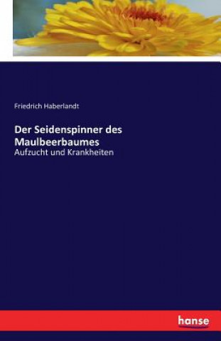 Seidenspinner des Maulbeerbaumes