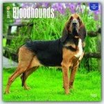 Bloodhounds 2017 Calendar