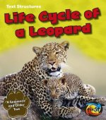 Life Cycle of a Leopard