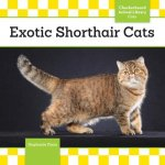 Exotic Shorthair Cats