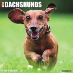 Just Dachshunds 2017 Calendar