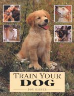 Train Your Dog
