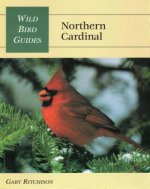 Wild Bird Guide: Northern Cardinal