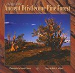 A Day in the Ancient Bristlecone Pine Forest