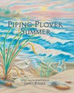 Piping Plover Summer