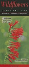 Wildflowers of Central Texas: A Guide to Common Native Species