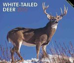 White-Tailed Deer 2012 Deluxe Wall