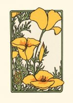 California Poppy, (Boxed)