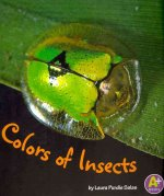 Colors of Insects