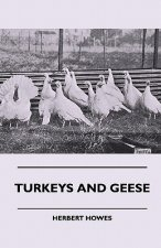 Turkeys And Geese