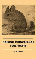 Raising Chinchillas For Profit