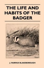 The Life and Habits of The Badger