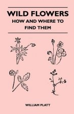 Wild Flowers - How and Where to Find Them