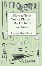 How to Trim Young Plants in the Orchard - An Article