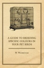 A Guide to Breeding Specific Colours in Your Pet Birds